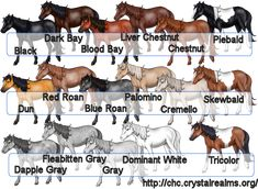 Horse Color and Markings Chart   Any color is acceptable, as is any combination of white markings. The ...