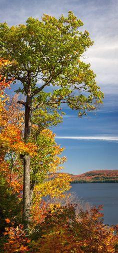 Fall oak tree (Algonquin Park, Ontario) by Elena Elisseeva on 500px