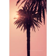 Palm tree print, sunset, summer, Palm tree wall art, pink, Portugal,... ($15) ❤ liked on Polyvore featuring pictures, backgrounds, art, other and pics