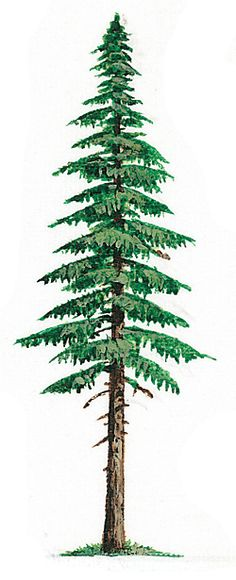 37 Ideas evergreen tree tattoo washington nature for 2019 Pine Tattoo, Evergreen Tree Tattoo, Evergreen Trees, Tree Sleeve Tattoo, Tattoo Tree, Deer Tattoo, Raven Tattoo, Tattoo Ink, Sleeve Tattoos