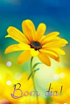 Daisy, Good Morning Flowers, Diy Spa, Happy Day, Color Splash, Morning Quotes, Essential Oils, Instagram, Best Wishes Messages