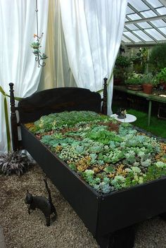 "Beautiful arrangement of #succulents. Gives the term ""garden bed"" a whole new meaning. Via: https://greenapplesgarden.files.wordpress.com/2012/01/bedplants.jpg"
