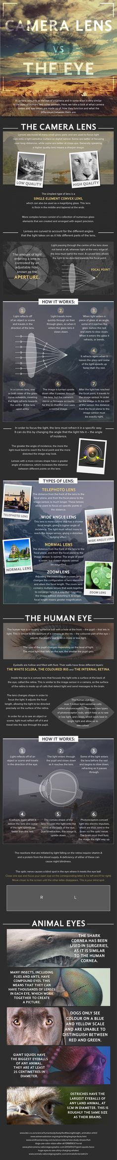 What are the differences between the human eye and the lens on your camera? This cheat sheet compiled by Clifton Cameras makes an in-depth camera lens vs h