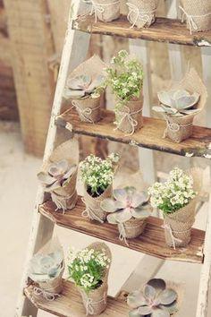 Deco bodas sin flores: plantas vivas #decoracion #diseñodebodas