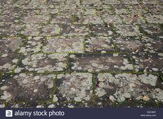 porphyry-pavement-with-lichen-DW19MT.jpg (1300×953)