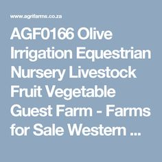 AGF0166 Olive Irrigation Equestrian Nursery Livestock Fruit Vegetable Guest Farm - Farms for Sale Western Cape