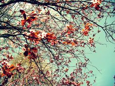 Image for Vintage Flowers Tumblr Cool Wallpapers