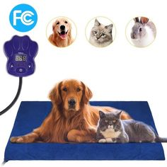 GROWUPER Pet Heating Pad, Electric Heating Pad Indoor Waterproof Adjustable Warming for… of 5 stars in Pet Supplies Supplies > Cats > Beds & Furniture > Bed Mats Supplies > Dogs > Beds & Furniture > Bed Mats Pet Dogs, Dogs And Puppies, Dog Cat, Pets, Chihuahua Dogs, Dog Birthday Gift, Dog Beds For Small Dogs, Dog Friends, Amigurumi