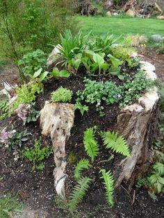 stump planter when planted. Tree stump planter when planted.Tree stump planter when planted. Dream Garden, Garden Art, Garden Design, Fairies Garden, Container Plants, Container Gardening, Indoor Gardening, Tree Stump Planter, Log Planter