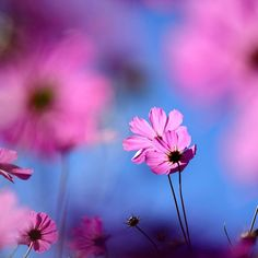 5th Apr Champs, Photos, Wallpaper, Flowers, Plants, Image, Beautiful, Google Search, Gardens