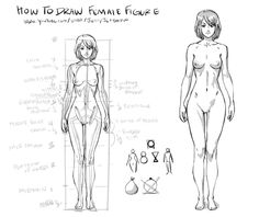 Anatomy Drawing Female How to draw Female Figure by JetEffects - Human Anatomy Drawing, Drawing Female Body, Human Figure Drawing, Drawing Body Proportions, Body Reference Drawing, Female Pose Reference, Art Reference Poses, Body Image Art, Drawing Superheroes