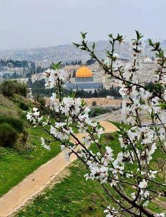 #Palestine #فلسطين #القدس