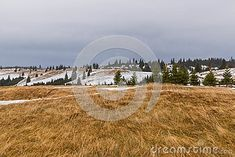 Photo about Winter landscape with snow on the ground and green pine trees and dry grass in the foreground, Paltinis, Romania. Image of grass, foreground, snowy - 105037599 Mountain Landscape, Winter Landscape, Pine Tree, Romania, Grass, Snow, Mountains, Image, Winter Scenery