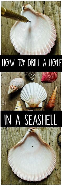 How to drill a hole in a seashell without breaking it. Learn how to drill a hole in a seashell with a simple tool you can purchase from the craft or hardware store. Make crafts or decorations with your shells. Seashell Jewelry, Seashell Art, Seashell Wind Chimes, Seashell Ornaments, Seashell Wreath, Crafts To Make, Arts And Crafts, Diy Crafts, Creative Crafts