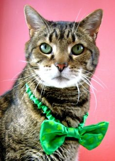 Tigger the St. Patrick's Day Cat. Virtually Eliminate Pet Odors With CritterZone. http://www.critterzoneusa.com