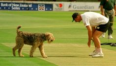 Ruff pitch, guv? Got any bite in it? Baldrick, the groundsman's dog, helps England coach David Lloyd inspect the Basin Reserve pitch, 1997. ©PA Photos