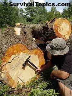 Edible Pine Bark - FANTASTIC Article.  Love it! <3