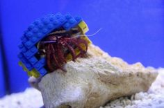 Harry the Crab is a crab with a Lego shell. #Lego #Crab #HarryTheCrab