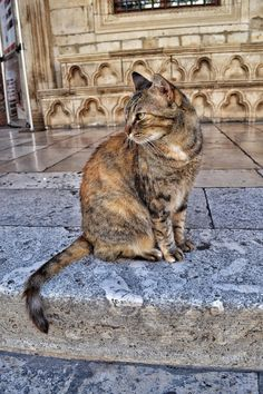 This lady posed for me in dubrovnik aka kings landing - http://cutecatshq.com/cats/this-lady-posed-for-me-in-dubrovnik-aka-kings-landing/