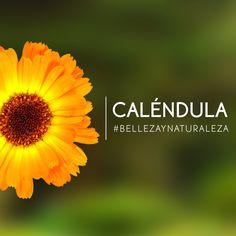 Elige nuestros productos con Caléndula, considerada una planta mágica por los egipcios y sorpréndete con sus beneficios y efectos sobre tu piel.