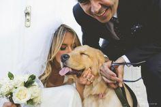 Cachorro e Casamento Golden Retriever