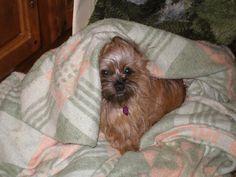Shiloh under her blankie