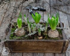 Spring Is Coming, Garden Boxes, Christmas Inspiration, Flower Arrangements, Diy And Crafts, Easter, Green, Flowers, Plants