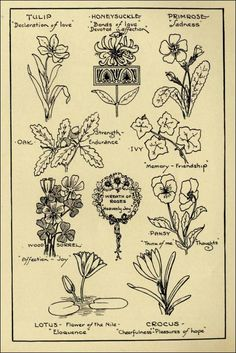 "Flower Patterns in ""Monumental Design: The Language of The Flowers"" (1927)"