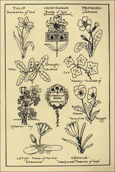 tulip_design_hints_8-1927_mon_design_flowers_p11.jpg (509×762)