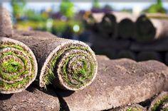 Professional Lawn Turf Suppliers Glasgow