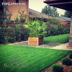 Gardens, gardening, gardendesign Sidewalk, Patio, Modern, Plants, Gardening, Design, Trendy Tree, Side Walkway, Lawn And Garden