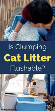 Can you flush clumping cat litter down the toilet, and is it safe for the environment? Discover all about clumping litter and if it's right for you and your cat. #clumpingcatlitter #bestclumpingcatlitter #bestcatlitter #catlitterideas Best Cat Litter, Litter Box, Surface Mining, Compost Bags, Cat Life, Cool Cats, Biodegradable Products, Helpful Hints