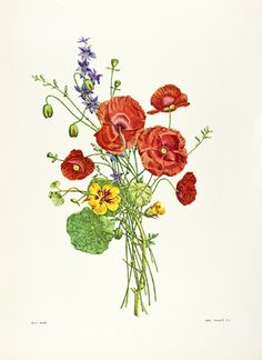 Bouquets by Jean-Louis Prevost botanical print from 1960