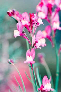 Flower Photography, Nature, Macro, 4 x 6, Home Decor, Feminine, Romantic, Fine Art Print, Botanical Images, Aqua, Fuchsia, Teal