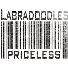 Labradoodles are priceless!! #labradoodles #australian #australian_labradoodles #dogs #puppies #love