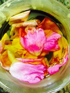 #DIY rose oil with fresh rose petals