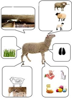 About Animal bu picture Farm Animal Crafts, Animal Crafts For Kids, Animal Projects, Farm Animals, Animals And Pets, Farm Activities, Animal Activities, Farm Unit, Animal Habitats
