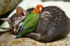 Animal Love: 12 Beautiful Photos - Animal Stories