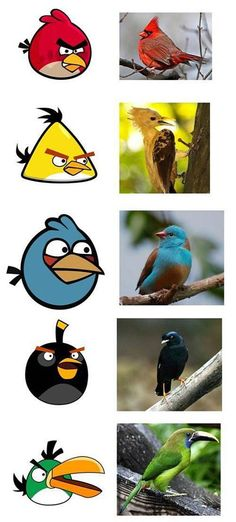 Flash News: Angry Birds discovered in real life by Ornithologists!! :D