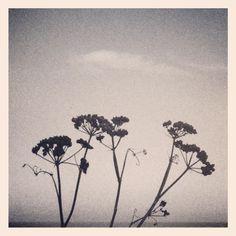 Seedpod silhouette.  Copyright Mash Media UK Limited