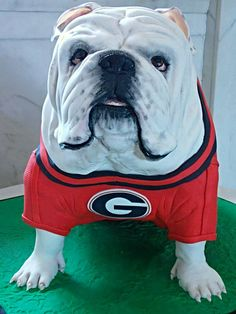 - Georgia Bulldog Groom's Cake. 7th time I've made him and he just keeps getting more realistic each time.
