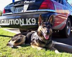 German Shepherd k-9 Unit <3 - www.policemag.com