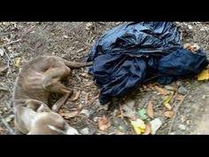 Philadelphia Police Officer Arrested for Dumping Emaciated Dog in Trash Bag - The Dogington Post Police Officer Arrested, Dog Abuse, Valley Park, Sick Dog, Local Parks, Dog Fighting, Trash Bag, Two Dogs, Trekking