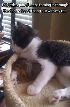 Squirrel and Cat Best Friends cute animals cat cats adorable animal kittens pets kitten squirrel funny animals I Love Cats, Cute Cats, Funny Cats, Hilarious Jokes, Mom Funny, Adorable Kittens, Funny Animal Pictures, Cute Pictures, Fail Pictures