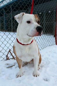 JOEY (sweetheart) KENNEL # 05...FOUND IN LORAIN COUNTY OHIO...NOW ADOPTABLE!!! Kennel # 05 available for adoption 3/8