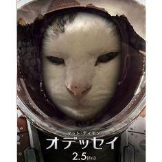 * 2016.3.4 * 寝れんから何となく流行りのやってみた * #火星ひとりぼっちジェネレーター  #ねこ #ねこ部 #ねこら部 #ふわもこ部 #ペコねこ部 #猫#ネコ#老猫#キジシロ#cat #catstagram #catofinstagram #lovelycat #instacat #本当は文字入る#でも顔隠れるから無しumetorikoume2016/03/04 00:15:50