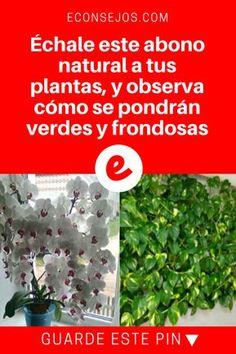 Abono casero para plantas | Échale este abono natural a tus plantas, y observa cómo se pondrán verdes y frondosas | Échale este abono natural a tus plantas, y observa cómo se pondrán verdes y frondosas.