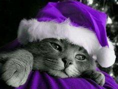 Love the kitty in purple