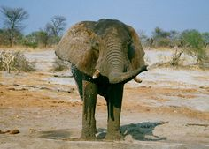 Photo taken by Dan Fleming on our 'Okavango Experience' trip