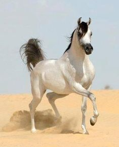 Horses  - Collections - Google+